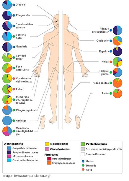 Dermatologia Elche Dermobiota, Microbiota y Piel